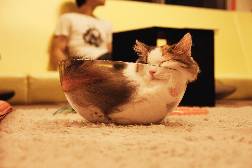 """15 котов, познавших великое искусство """"Sleep-Fu"""""""