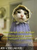 Позитивные котэ 10.05.14