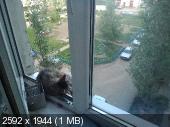 http://i61.fastpic.ru/thumb/2014/0515/de/93b45a297ac6ec2131e135c3416078de.jpeg