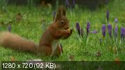 BBC. Британские времена года [Серии 1-4 из 4] (2013) HDTVRip 720p
