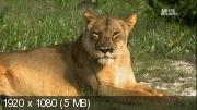 Королева-львица / Настоящая королева львица (2013) HDTV 1080i
