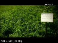 Травы (2014) SATRip
